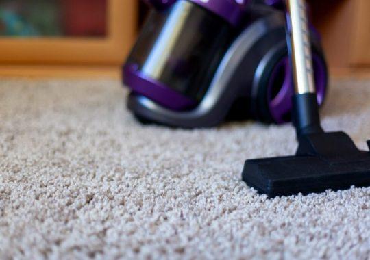 Mites de tapis : Détectez et combattez naturellement