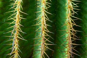 planter cactus exterieur