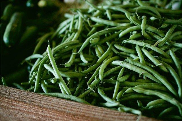 Quand semer les haricots verts?